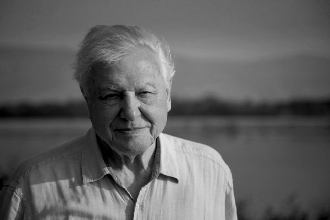 David Attenborough Joins Instagram with a Stark Environmental Warning